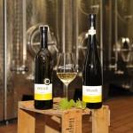 Unsere Weißweine lagern in Edelstahl